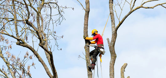 Tree Surgery, Tree Surgeons Forestry Management Mulch Alton Fourmarks Alresford Basingstoke Bordon Farnham Four Marks Petersfield Ropley Selborne Winchester