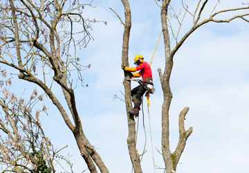 Alton Tree Care - Tree Surgery Tree Surgeons Fourmarks Alresford Basingstoke Bordon Farnham Four Marks Petersfield Ropley Selborne Whitehill Winchester